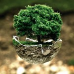 How To Flourish – Part II