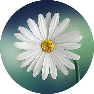 Bloom Pathway