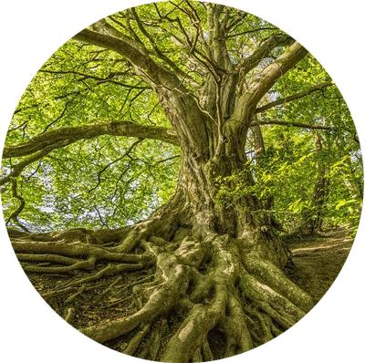 Root Pathway